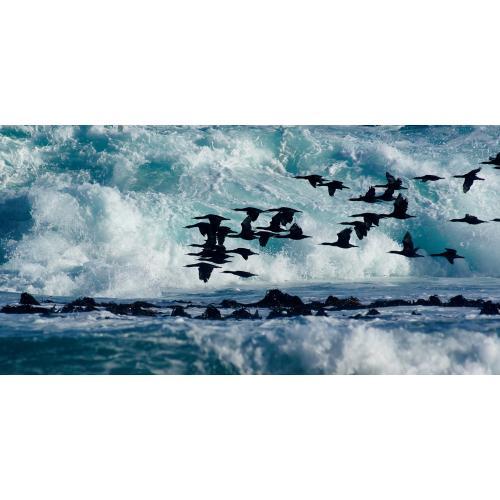 Infraobraz Ptáci ve vlnách 120x60cm (600W)