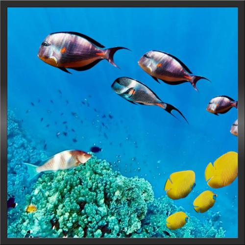Infraobraz Mořské ryby 2 60x60cm (300W)
