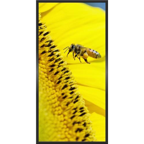 Infraobraz Včela 60x120cm (600W)